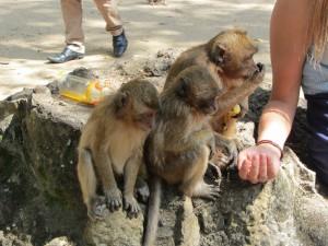 Monkey Cave Temple