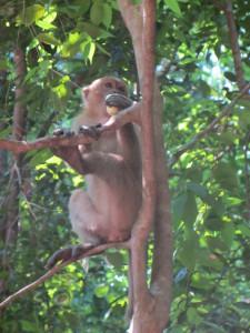 monos de Erawan