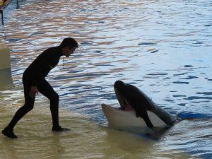 Show de las Orcas