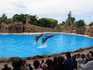 Delfines de Loro Parque
