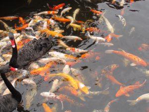 Peces de Loro Parque