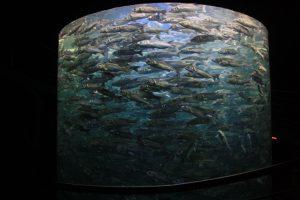 Aquarium de Loro Parque