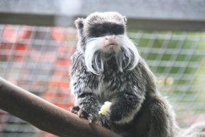Primates de Loro Parque
