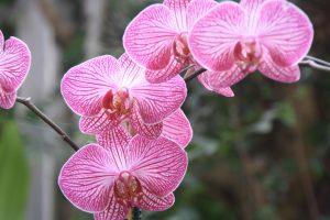 Orquídeas Loro Parque