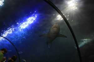 Tiburón de Loro Parque
