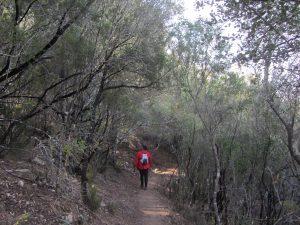 Camino de la ruta roja