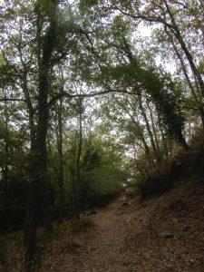Naturaleza de los alrededores del Monasterio de Yuste