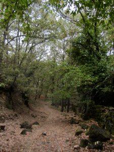 Naturaleza del Monasterio de Yuste