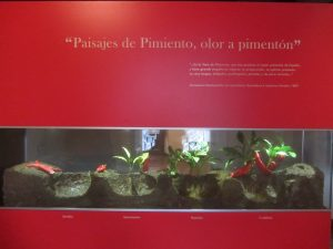 Cultivo del pimiento, del Museo del Pimentón de la Vera