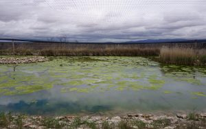 Laguna de Aclimatación