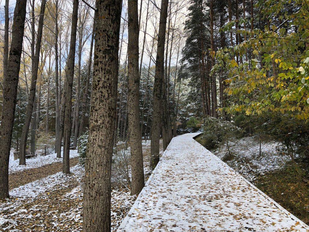 Río Cuervo nevado