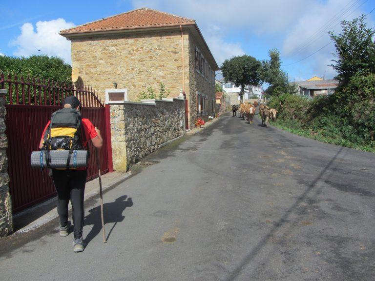 caminando mochilas